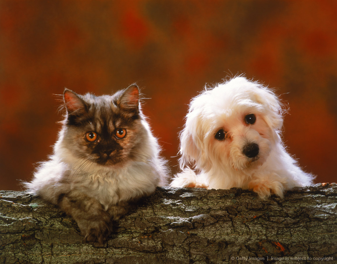Portrait of puppy and cat